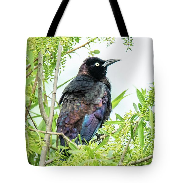 Tote Bag featuring the photograph Boat-tailed Grackle by Michael D Miller