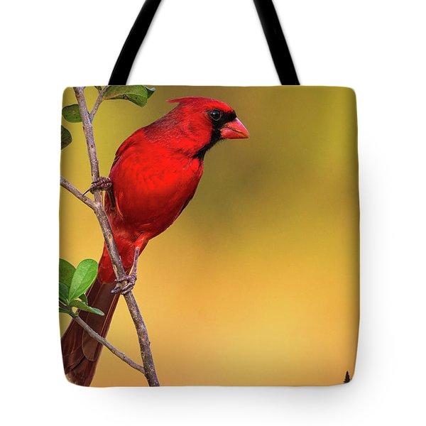Bright Red Cardinal Tote Bag