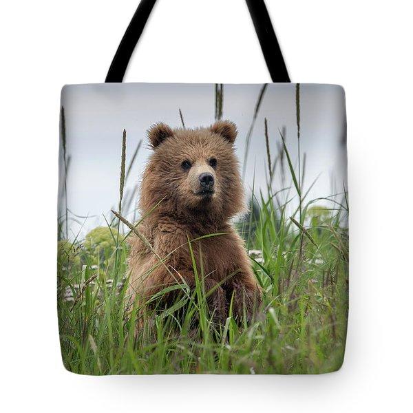 Brown Bear Cub In A Meadow Tote Bag