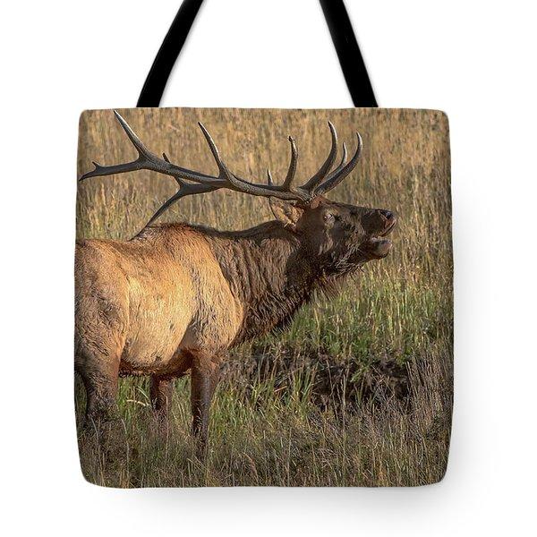 Bugling Bull Elk 7777 Tote Bag
