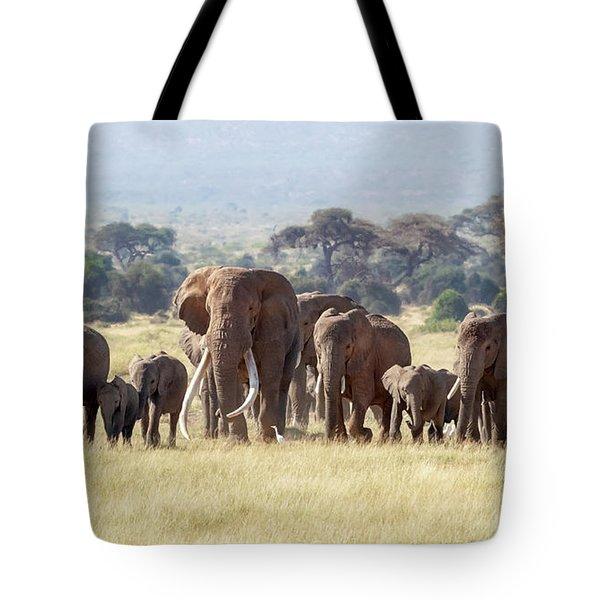 Bull Elephant With A Herd Of Females And Babies In Amboseli, Kenya Tote Bag