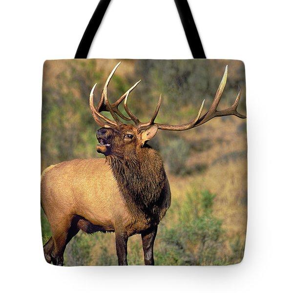 Bull Elk In Rut Bugling Yellowstone Wyoming Wildlife Tote Bag