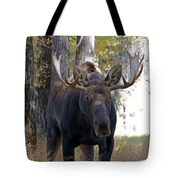 Bull Moose Approaching Tote Bag