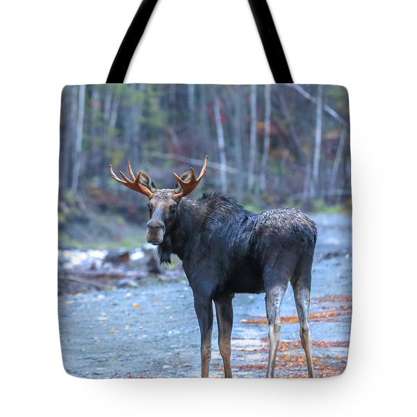 Bull Moose At Moosehead Lake Tote Bag