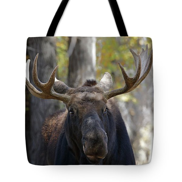 Bull Moose Close Up Tote Bag