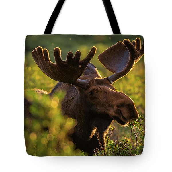 Bull Moose Enjoys A Light Sunrise Rain Tote Bag