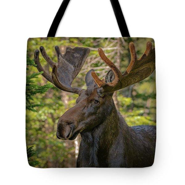 Bull Moose Glamour Shot Tote Bag