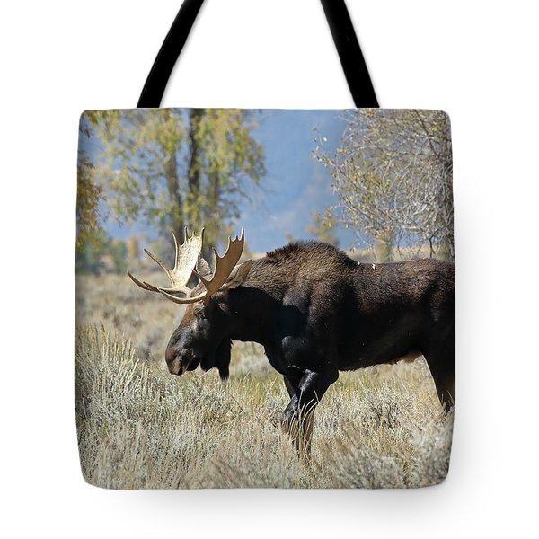 Bull Moose In Sage Tote Bag