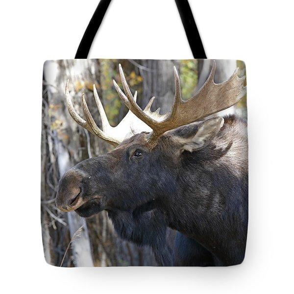 Bull Moose Study Tote Bag