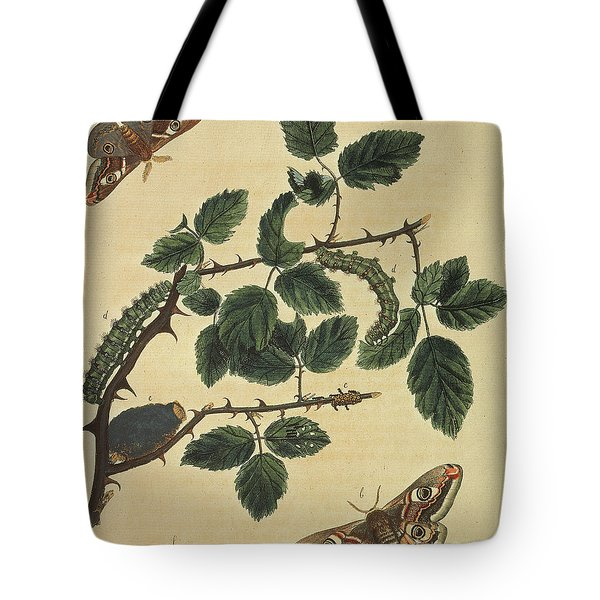 Butterflies, Caterpillars And Plants Plate 1 Tote Bag