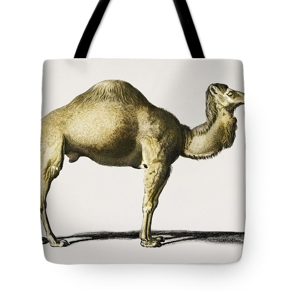 Camel  Camelus  Illustrated By Charles Dessalines D' Orbigny  1806-1876  Tote Bag
