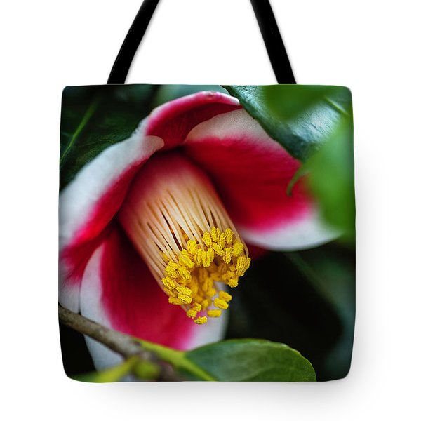 Tote Bag featuring the photograph Camellia Bloom And Leaves by Keith Smith
