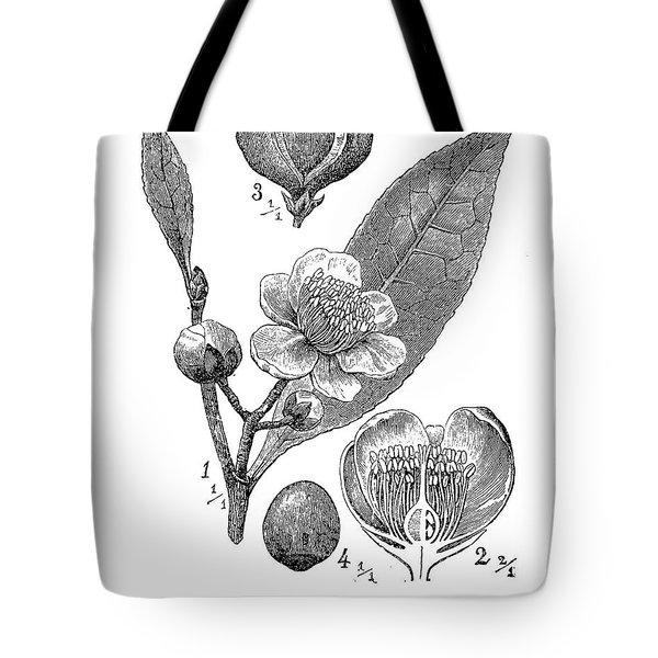 Camellia Sinensis, Botanical Vintage Engraving Tote Bag