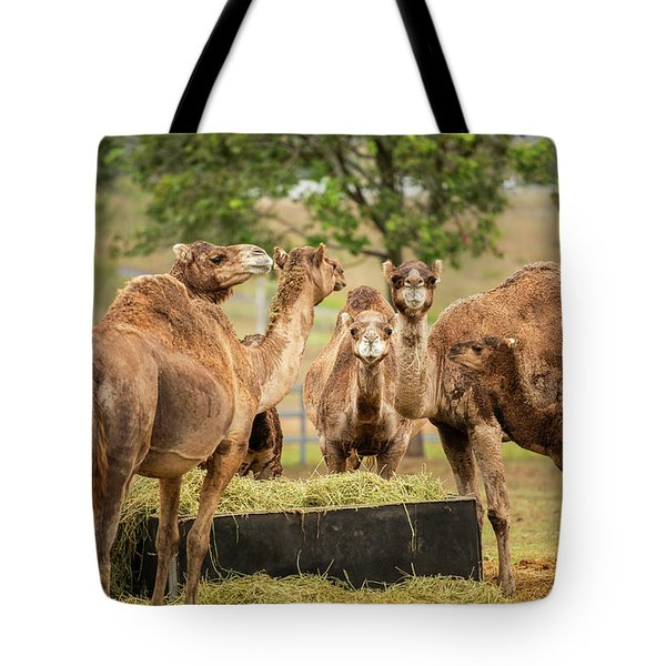 Tote Bag featuring the photograph Camels Out Amongst Nature by Rob D Imagery
