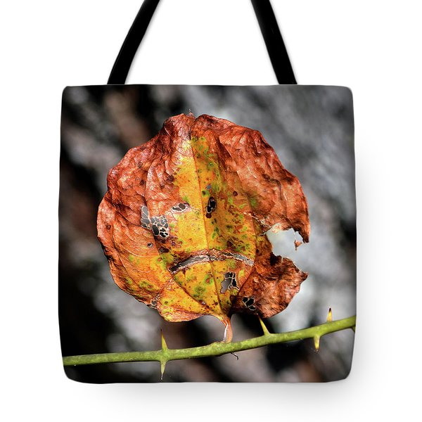 Tote Bag featuring the photograph Carved Pumpkin Leaf At Gordon's Pond by Bill Swartwout Fine Art Photography