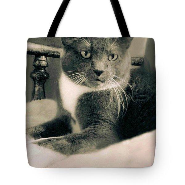 Cat Boticas Portrait  7 Tote Bag