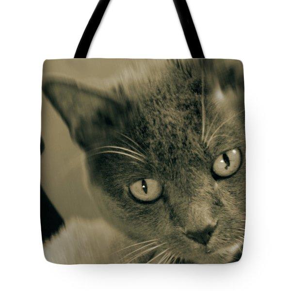 Cat Boticas Portrait 9 Tote Bag