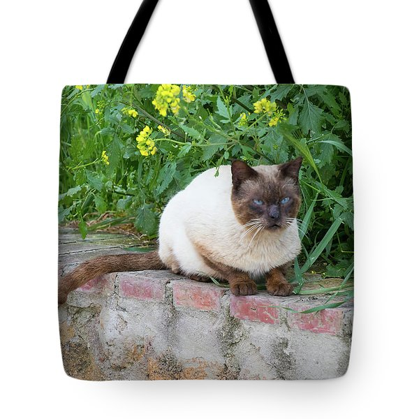 Tote Bag featuring the photograph Cat On A Wall by PJ Boylan