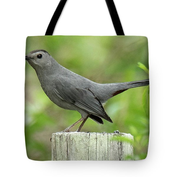 Tote Bag featuring the photograph Catbird by Michael D Miller