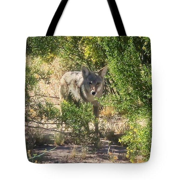 Cautious Coyote Tote Bag