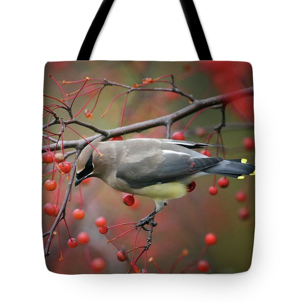 Cedar Waxwing 102206 Tote Bag