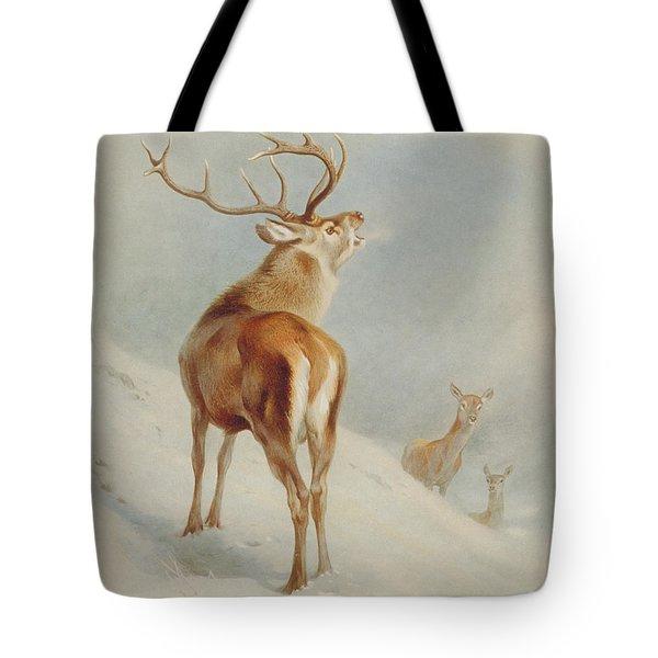 Cervus Elaphus, Red Deer Tote Bag