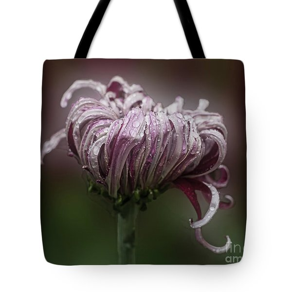 Chrysanthemum 'lily Gallon' Tote Bag