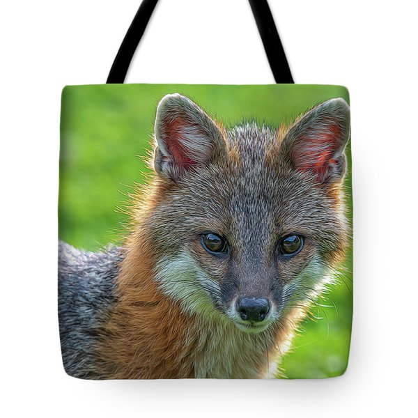 Close Up Grey Fox Looking Intent Paintography Tote Bag