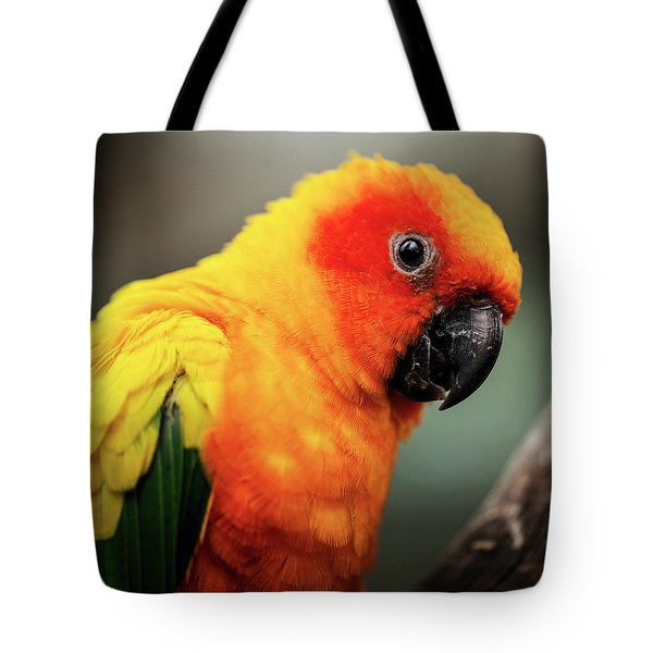 Close Up Of A Sun Conure Parrot. Tote Bag