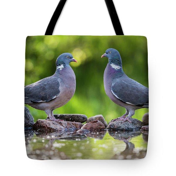 Common Wood Pigeons Meeting At The Waterhole Tote Bag