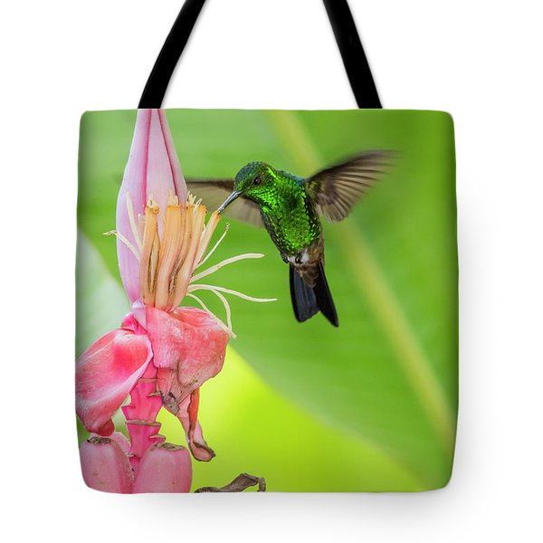 Tote Bag featuring the photograph Copper Rumped Hummingbird Feeds On A Banana Flower by Rachel Lee Young