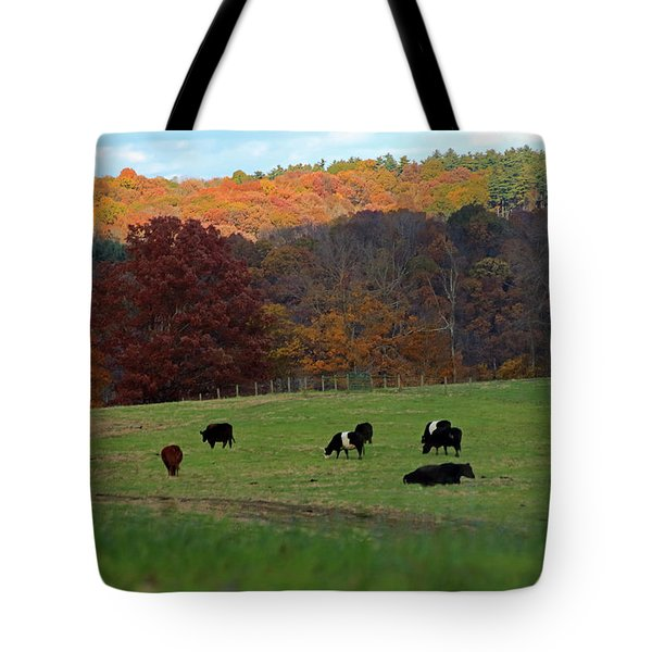 Tote Bag featuring the photograph Cows Grazing On A Fall Day by Angela Murdock