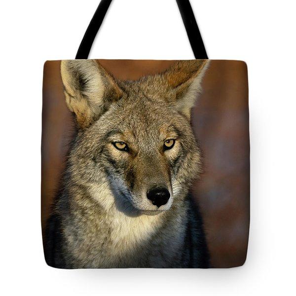 Coyote 1 Tote Bag