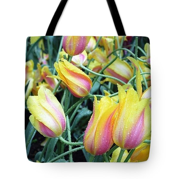 Crazy Tulips Tote Bag