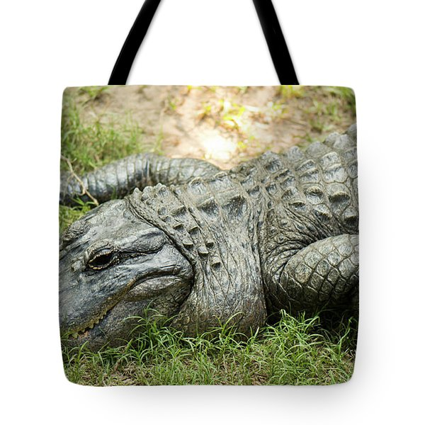 Tote Bag featuring the photograph Crocodile Outside by Rob D Imagery