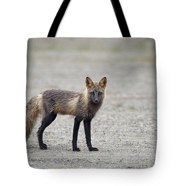 Cross Fox In Alaska Tote Bag