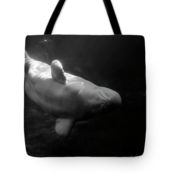 Curious Beluga Tote Bag