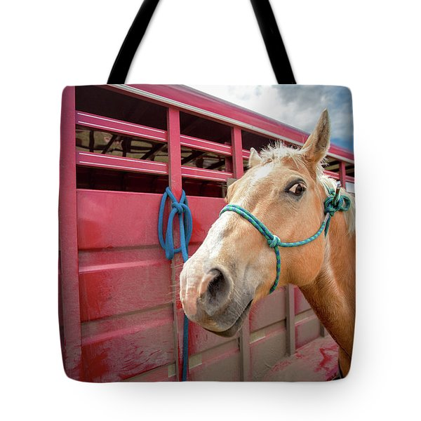 Curious Horse Tote Bag