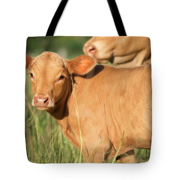 Tote Bag featuring the photograph Cute Calf by Rob D Imagery