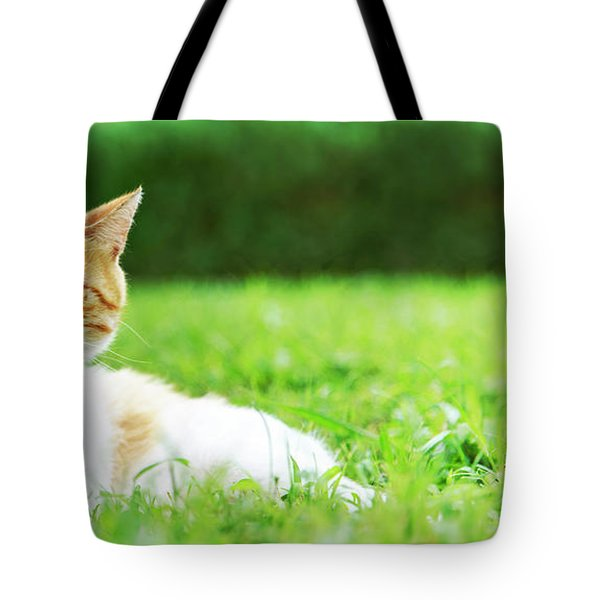 Cute Domestic Ginger Cat Relax In Outdoor Garden.  Tote Bag