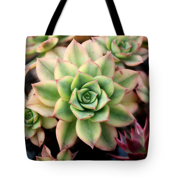 Tote Bag featuring the photograph Cute Succulent by Top Wallpapers
