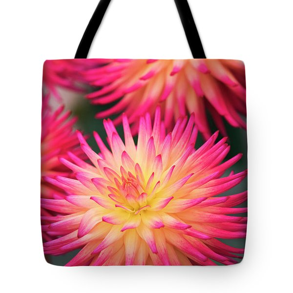 Tote Bag featuring the photograph Dahlia Josudi Tel Star Flowers  by Tim Gainey