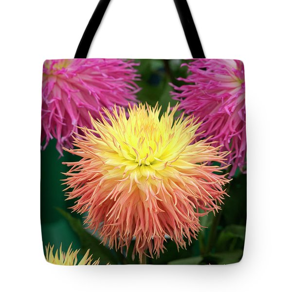Tote Bag featuring the photograph Dahlia Normandie Frills Flowers by Tim Gainey