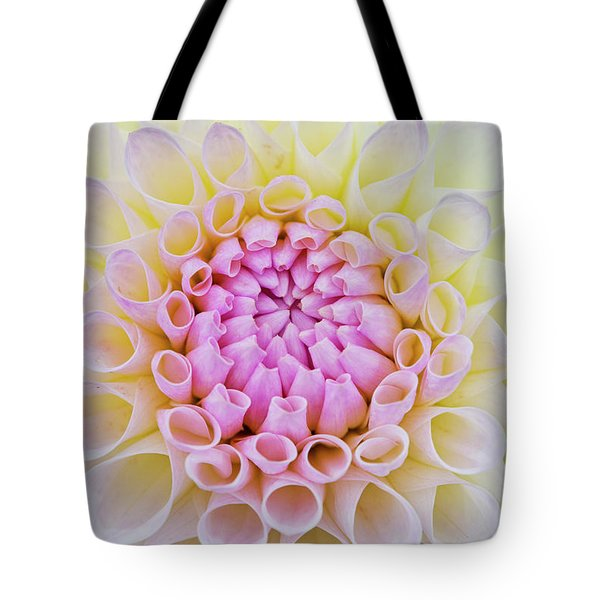 Tote Bag featuring the photograph Dahlia Ryecroft Brenda T Flower by Tim Gainey