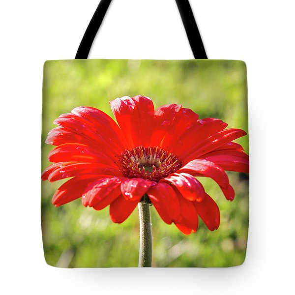 Daisy In The Rain Tote Bag
