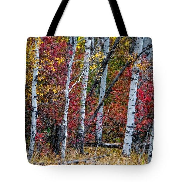 Deep Aspens Tote Bag