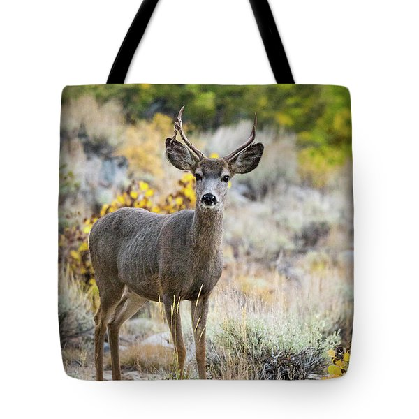 Tote Bag featuring the photograph Deer by Vincent Bonafede