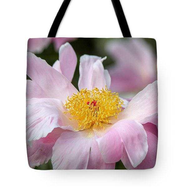 Delicate Pink Peony Tote Bag