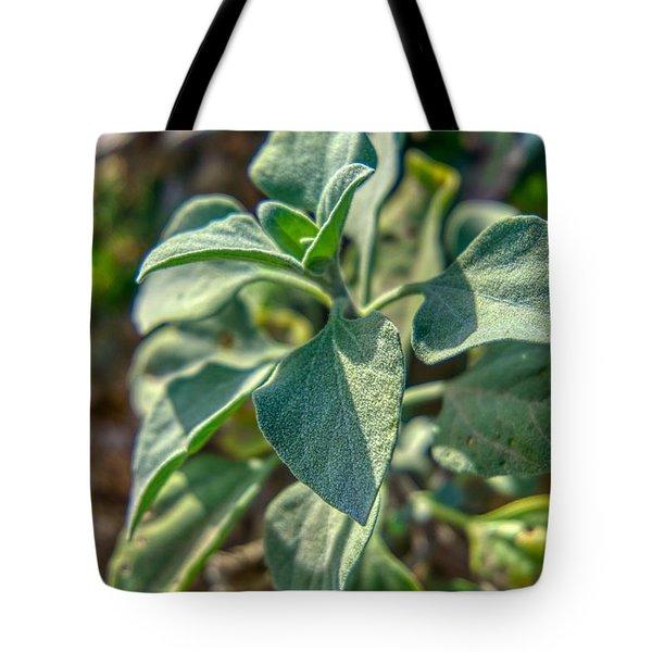 Desert Plant Life Tote Bag