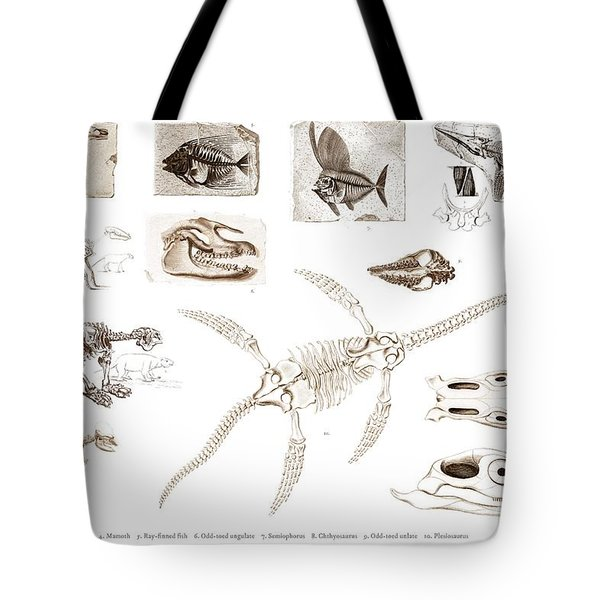 Different Types Of Ancient Fossils Illustrated By Charles Dessalines D' Orbigny  1806-1876  Tote Bag